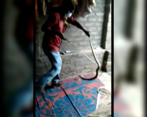 Bhubaneswar Snake