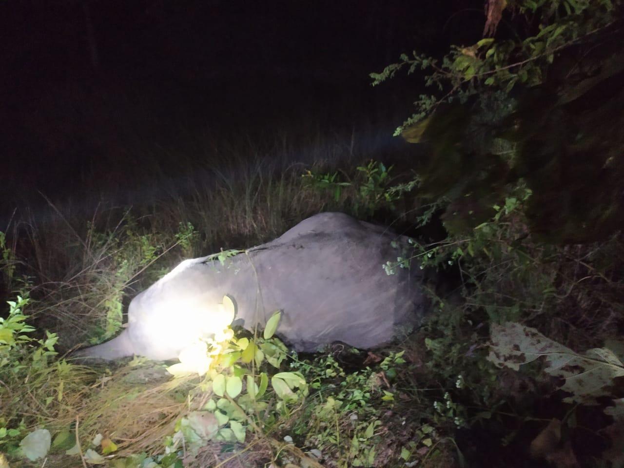 Elephant Killed In Jujumura Hit By BBSR RKl Intercity Express