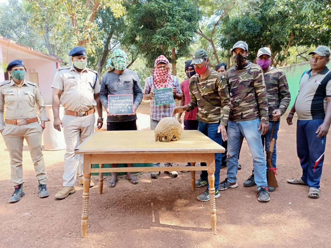 Dhenkanal Forest Department Arrested Two In Pangolin Transport Case