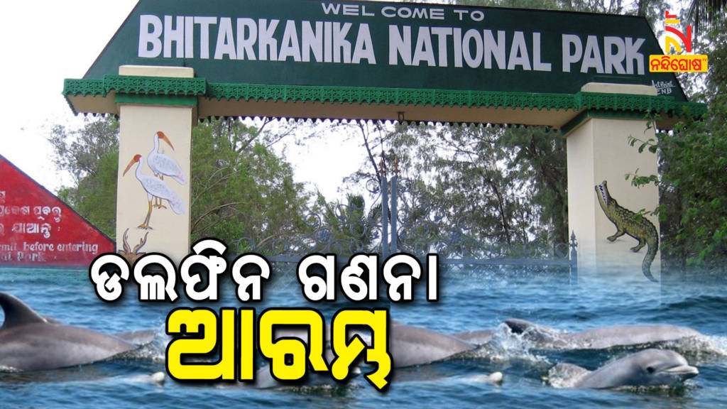 Counting Of Dolphin In Bhitarkanika Is Underway