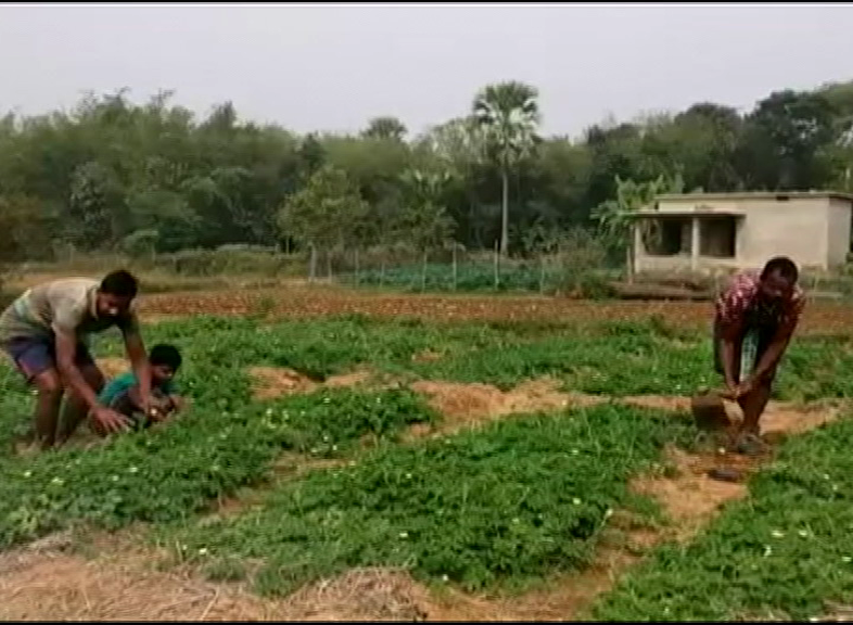 Farmer Bhadrak