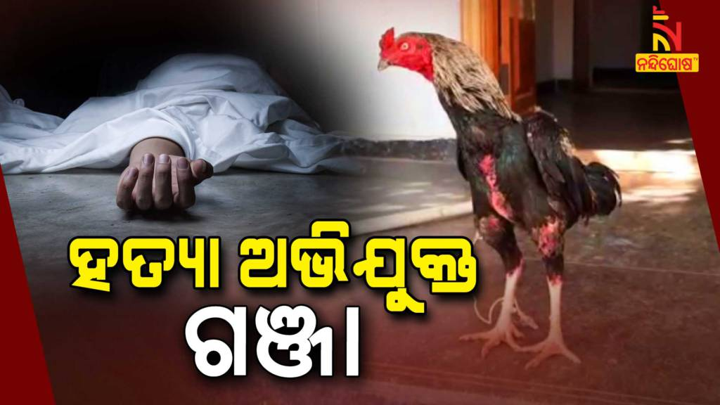 Cock Attacked With A Knife, Owner Died In Telangana