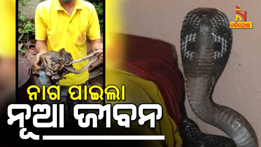 Fire Service Employee Safely Rescued An Cobra From Liquid Asphalt