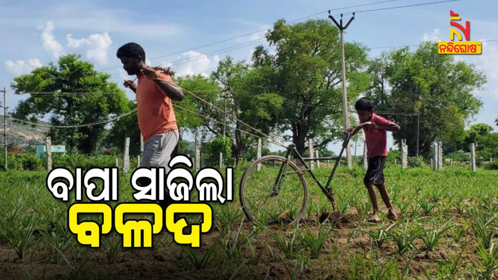 Tamilnadu Farmer Use Sons Bicycle To Plough Field Due To Faced The Brunt Of Lockdown