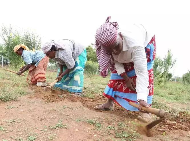Tamilnadu Union Minister L Murugan Parents Works As Daily Labour In Village