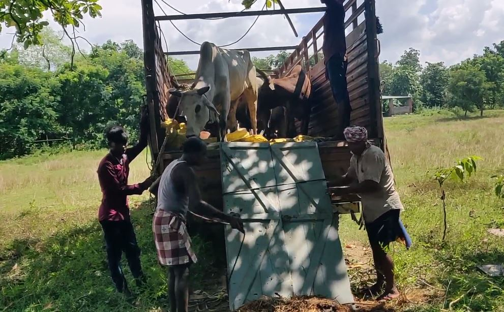 Deogarh Police Seized Cow Laden Truck, Arrested 5